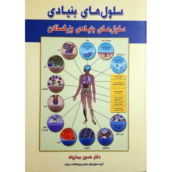 سلولهای بنیادی (سلولهای بنیادی بزرگسالان)